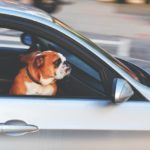 How to Prepare Your Dog for Transportation